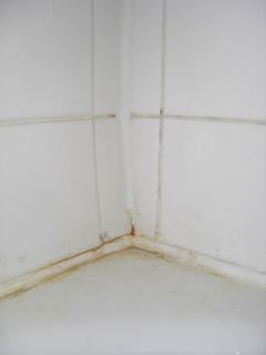 Bathroom Mold